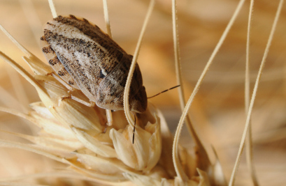 Crop Pests: Coming Soon to the Food Near You