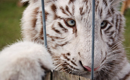 What Happens to Publicly Displayed Baby Wild Animals After We Pet Them?