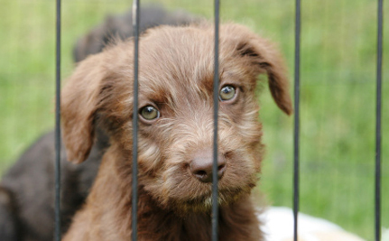 """28 Dogs Killed After """"No-Kill"""" Shelter Swindled Their Owners"""