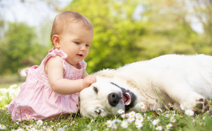 How to Introduce Your New Baby to Your Pet