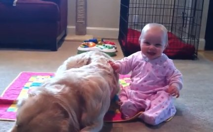 Daily Cute: Baby Tries to Wake Up Napping Golden Retriever