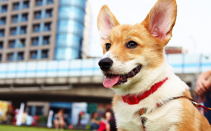 The Ultimate Guide to Big City Living with Your Canine Companion
