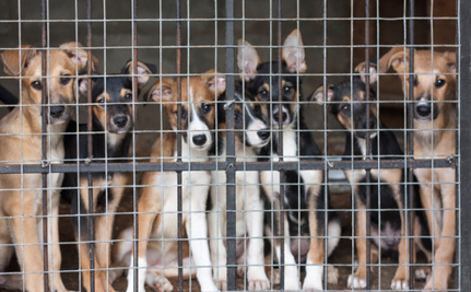 Finally, USDA Wants to Close a Gaping Puppy Mill Loophole