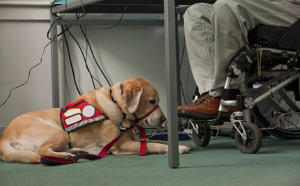 This Fall's Hottest Accessory: Fake Service Dogs?