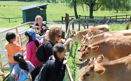 4 Incredible Animal Sanctuaries You Need to Visit This Fall