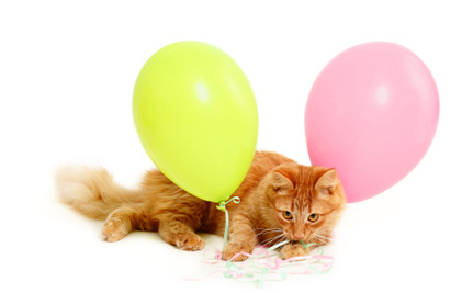 Daily Cute: It's Raining Balloons on This Kitty