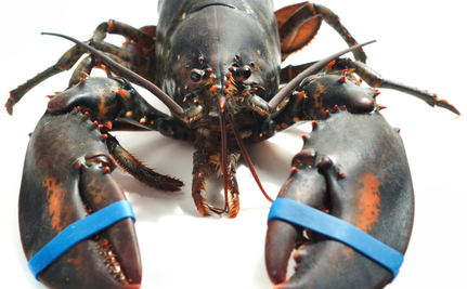 Seafood Plant Rips Apart Live Lobsters and Crabs, Says PETA