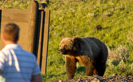 Your Chance of Running into a Bear Just Got Much Bigger