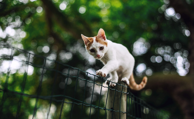 6 Reasons to Keep Cats Inside