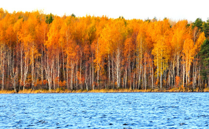 Love Fall Foliage? Get Ready For Disappointing Colors This Year