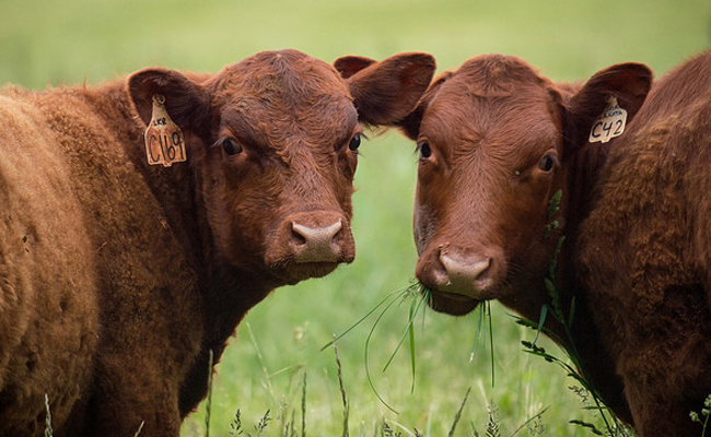 7 Really Gross Reasons to Never Eat Meat Again