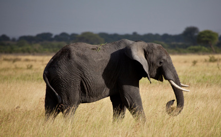 "Success! NBC Cancels Elephant-Killing Show ""Under Wild Skies"""