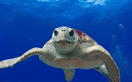 Mystery Surfer Saves Drowning Sea Turtle, Then Catches His Next Wave
