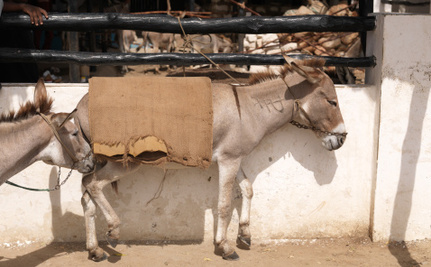 Donkey Ambulance Delivers for Expecting Moms in Afghanistan