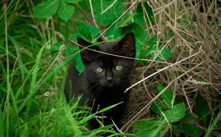 Feral Cats Need Love, Too: Help Make Communities Safer for Them