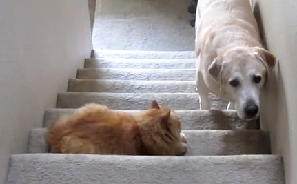 Daily Cute: Don't Cross This Cat, or Else!