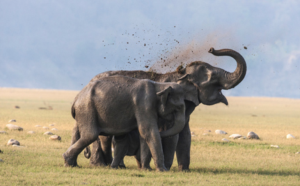 Elephants Understand Us (So Why Do We Keep Killing Them?)