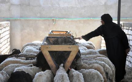 Women�s Co-Ops Are Changing Lives and Lands in Upper Egypt