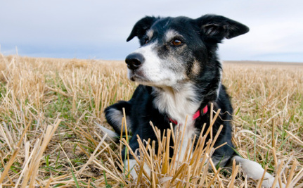 Victory! No Plea Bargain for Crash the Dog's Killer