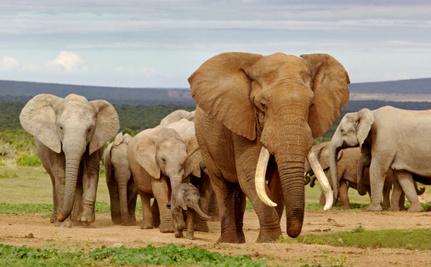 Daily Cute: Rehabilitated Elephant