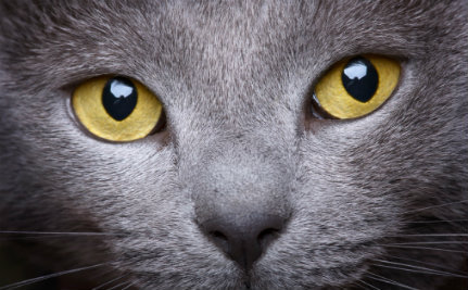 See How the World Looks Through Your Cat's Eyes