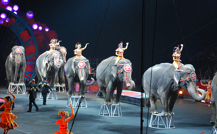 Success! Los Angeles Bans Use of Bullhooks on Circus Elephants