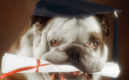 Rescue Dog Gets an MBA and Uncovers Fraud at Online University