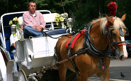 Will Horses Be Slaughtered If Horse-Drawn Carriages Are Banned?