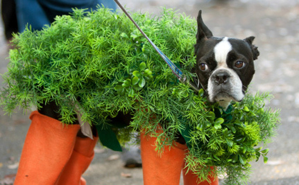Pets in Costumes: Cute or Cruel?