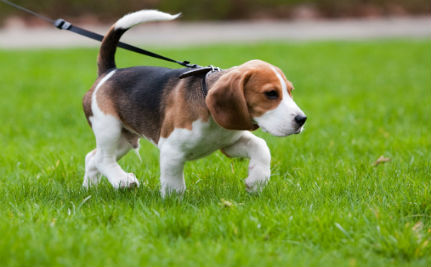 What Does Your Dog's Tail Wagging Really Mean?