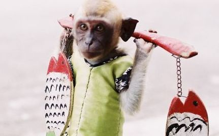 Jakarta Says No to Dancing Monkey Shows