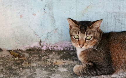 Make Your Community a Safe and Loving Space for Free Roaming Cats