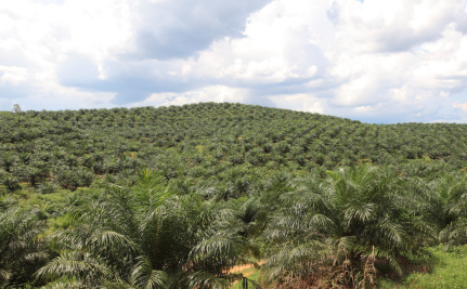 Palm Oil Companies Keep Breaking the Promises They Claim to Keep