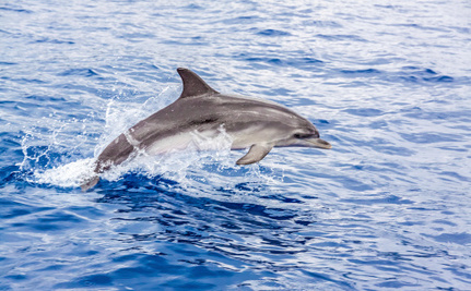 Dolphin-Killing Virus May Be Spreading to Other Species