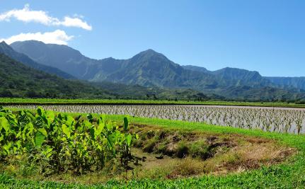 Kauai Mayor Vetoes GMO Bill, Community Fights Back