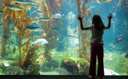 What Happens When an Aquarium Closes?