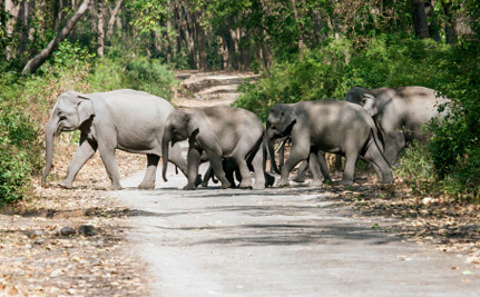 Endangered Elephants in India Have a Surprising New Threat