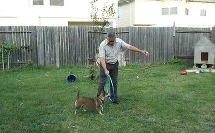 Daily Cute: Hula Hoop Jumping Dog