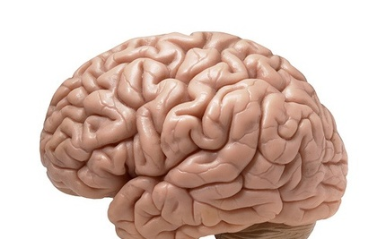 Good News! It Turns Out We Actually Use Our Whole Brains