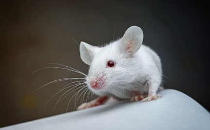 3 Innovations That Can Help End Animal Testing