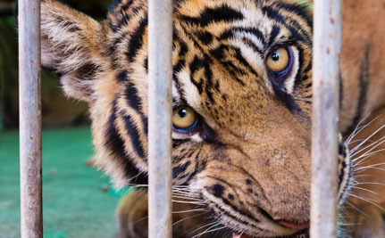 The List of States That Ban Exotic Animals as Pets Could Grow Soon