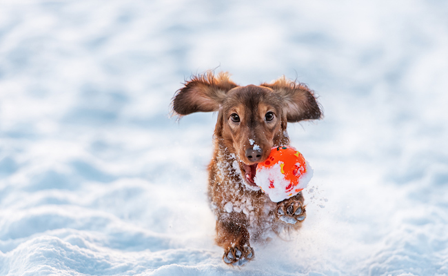 7 Ways to Keep Your Pets Warm this Winter