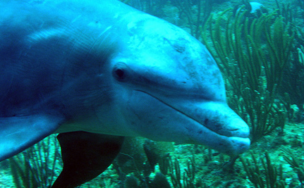 Daily Cute: Baby Dolphin Thanks Fisherman for Rescue