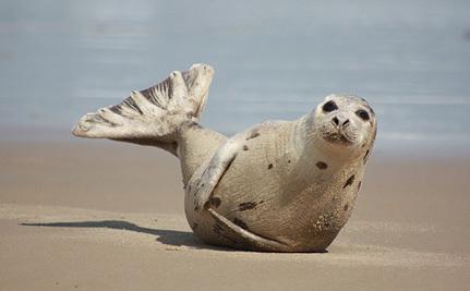 Victory! EU's Seal Product Ban Upheld by World Trade Organization