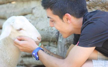 How Animal Sanctuaries Can Heal Our Hearts
