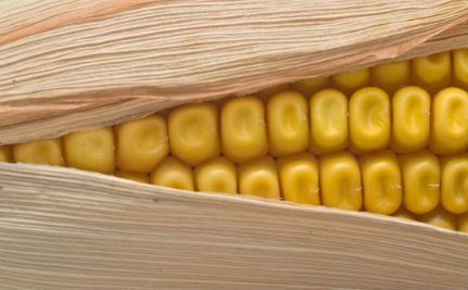 What Does It Mean When an Anti-GMO Study is Retracted?