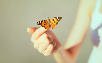 San Francisco Considers Banning… Butterflies?