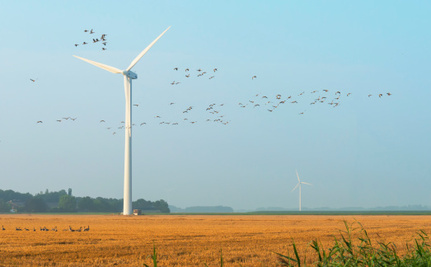 4 Things That Kill More Birds Than Wind Farms
