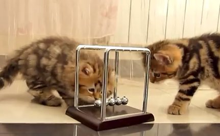 Daily Cute: Kittens Toy With Newton's Cradle, Learn Physics Along the Way