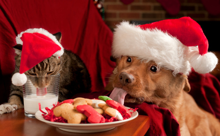 12 Festive Munchies You Should Never Feed Your Dog or Cat